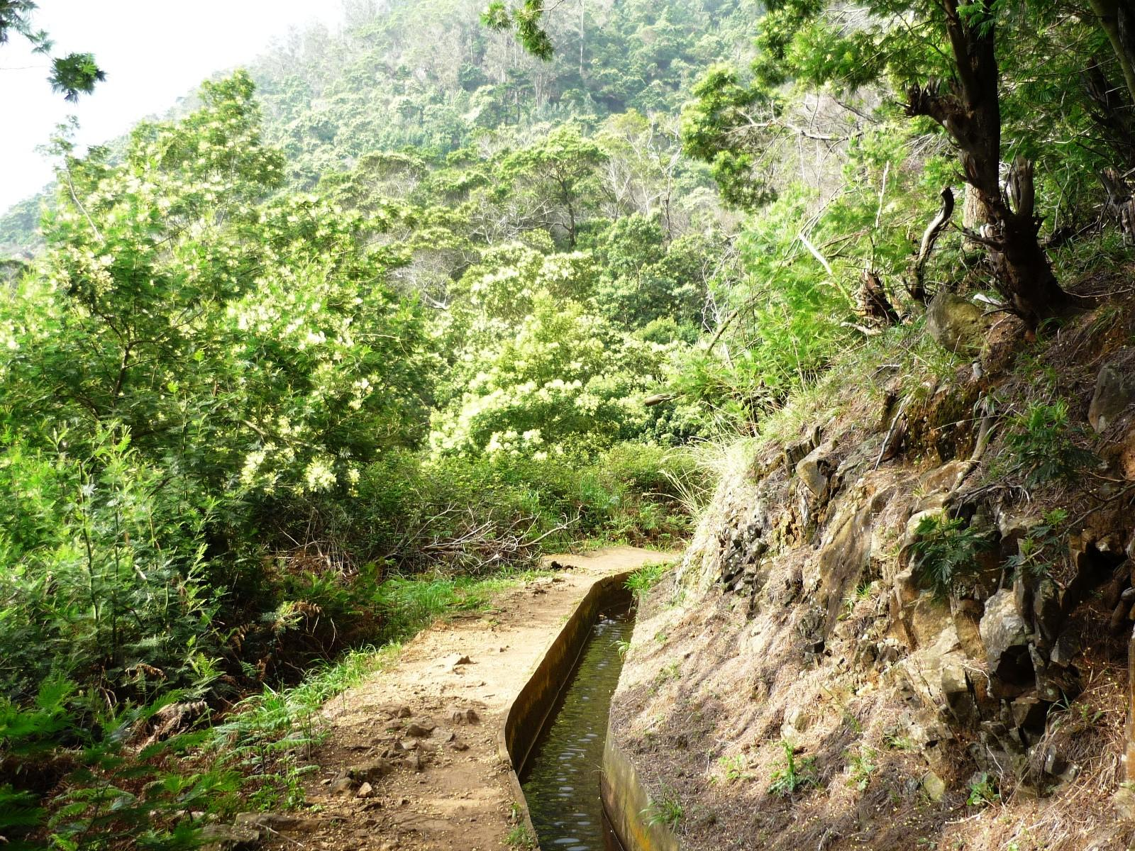 Levada do Caniçal